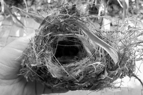 nest-BW